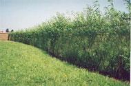 plant_fence