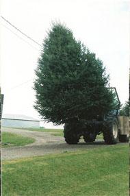 tree_moving